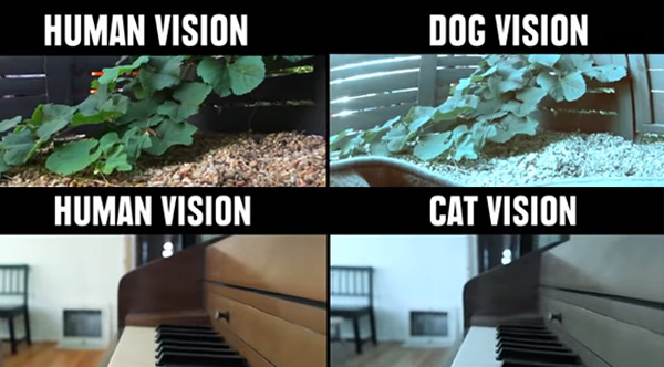 How Animals See The World Vs. How Humans See The World