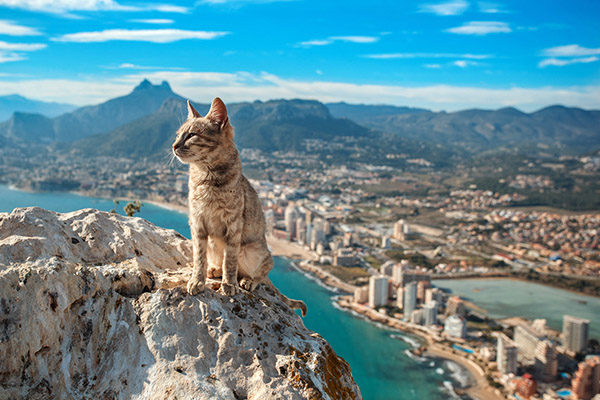A cat sits majestically over the Spanish town of Calp