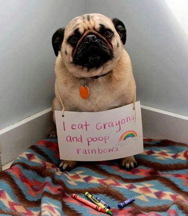 best dog shaming pictures