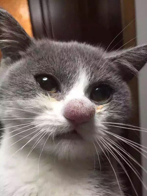 cat and dogs stung by bees