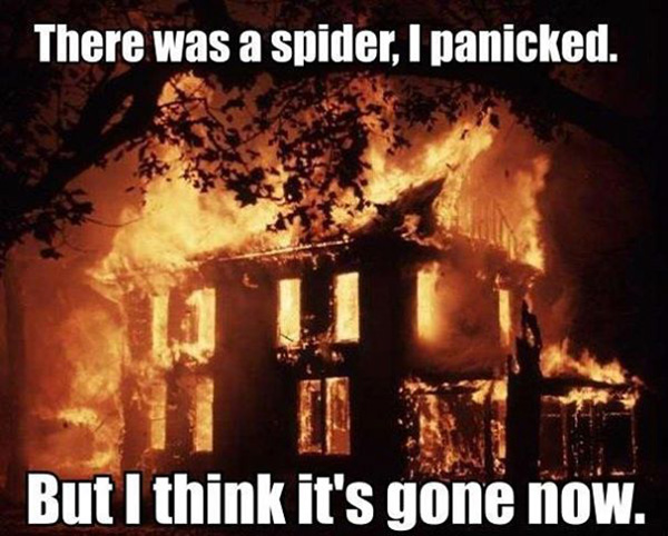 spider fear