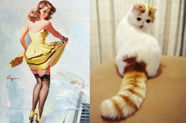cats as pin up girls funny
