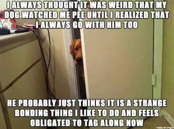 dog watch us in bathroom funny meme