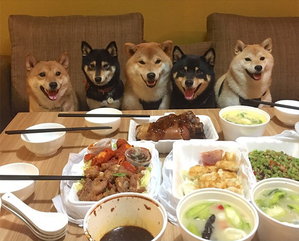 dogs hungry for dinner