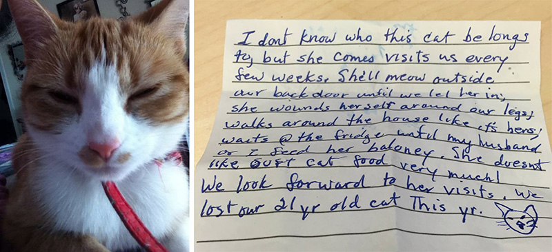 cat comes home with note