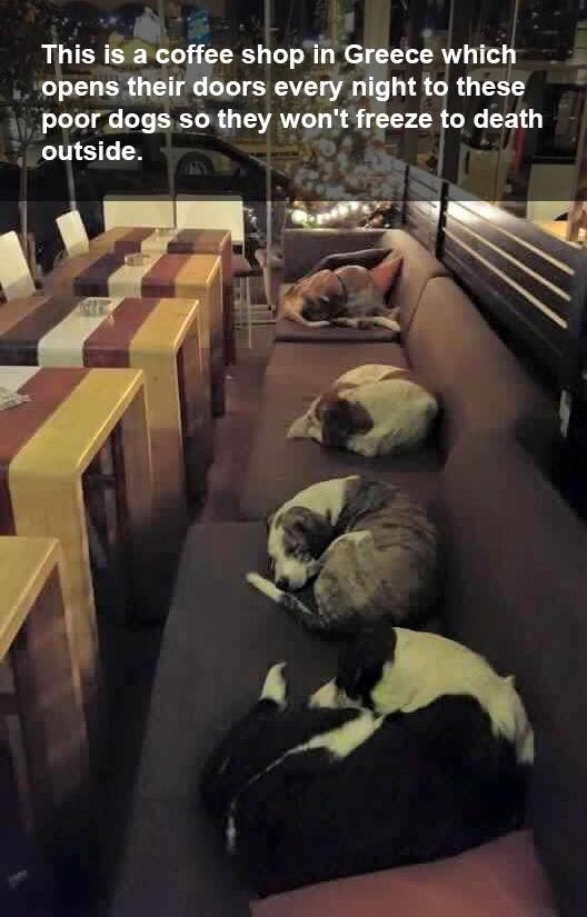 Greece coffee shop lets stray dogs sleep at night