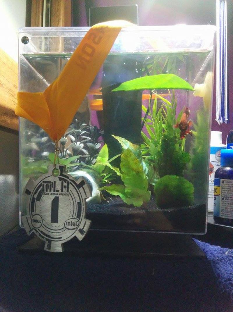 beta fish viking funeral