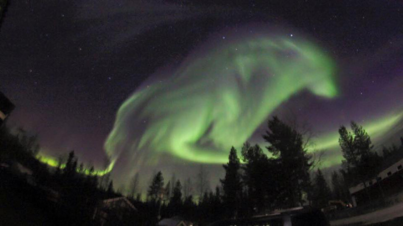 northern lights wolf in sky