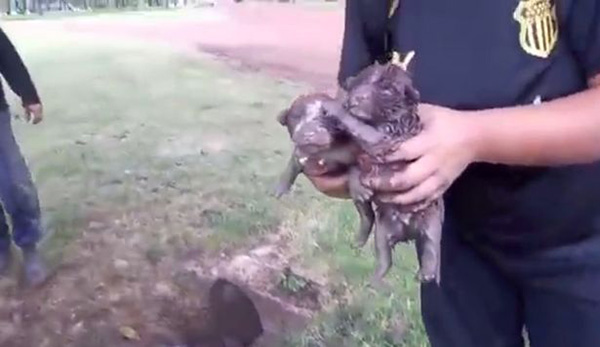 amazing puppy rescue from narrow pipe