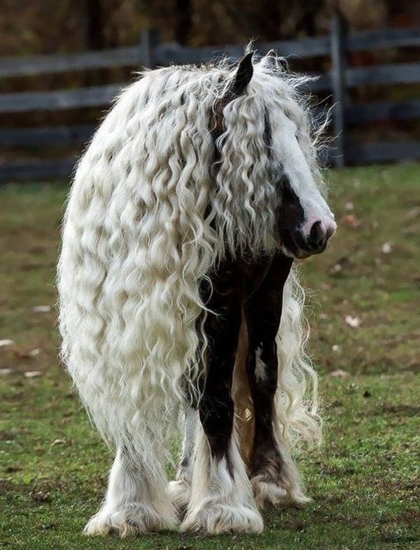 horse hair beautiful