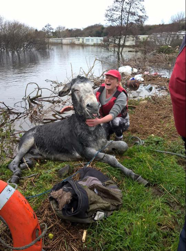 saved donkey from drowning