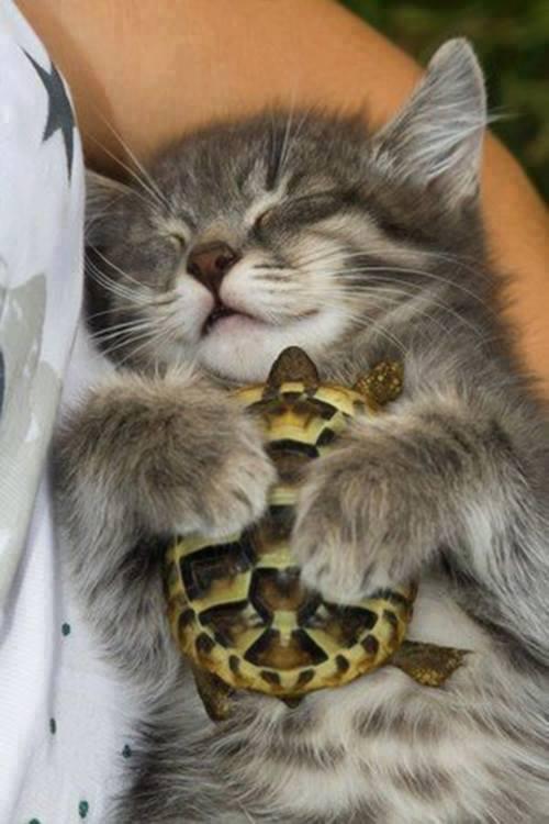 kitten baby tortoise snuggling