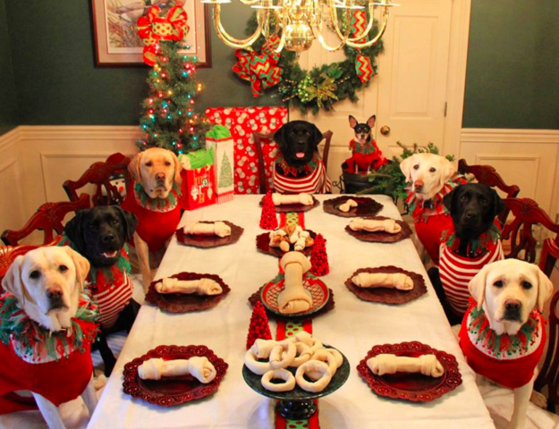 Christmas kids table for dogs