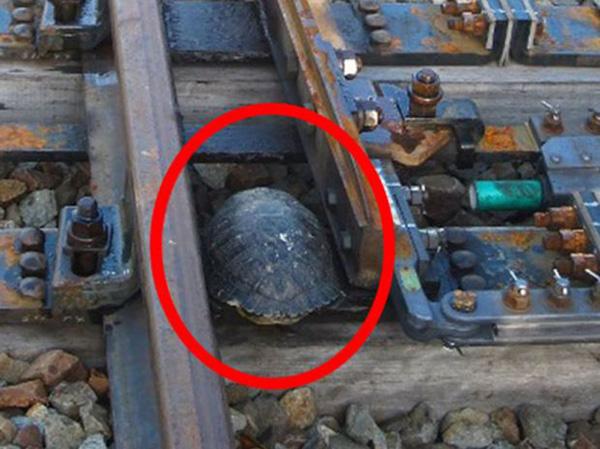 turtle tunnel Japan