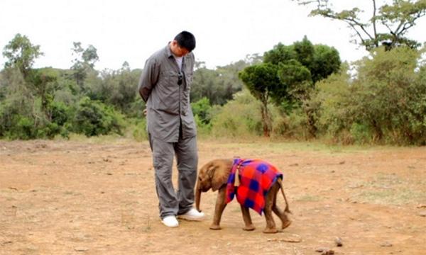 saving the elephants