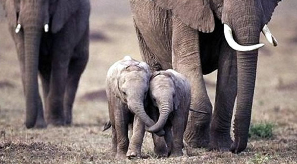 prices for ivory dropping