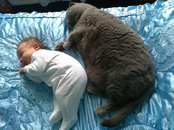 cat and baby sleeping same position
