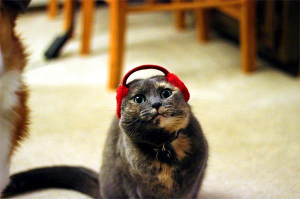 cat earmuffs