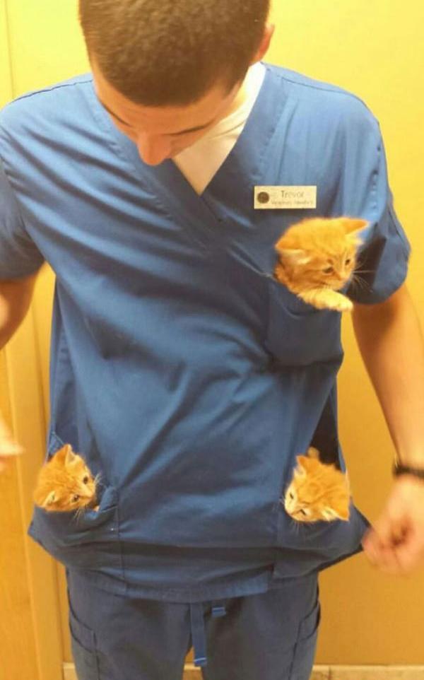 animal hospital perks