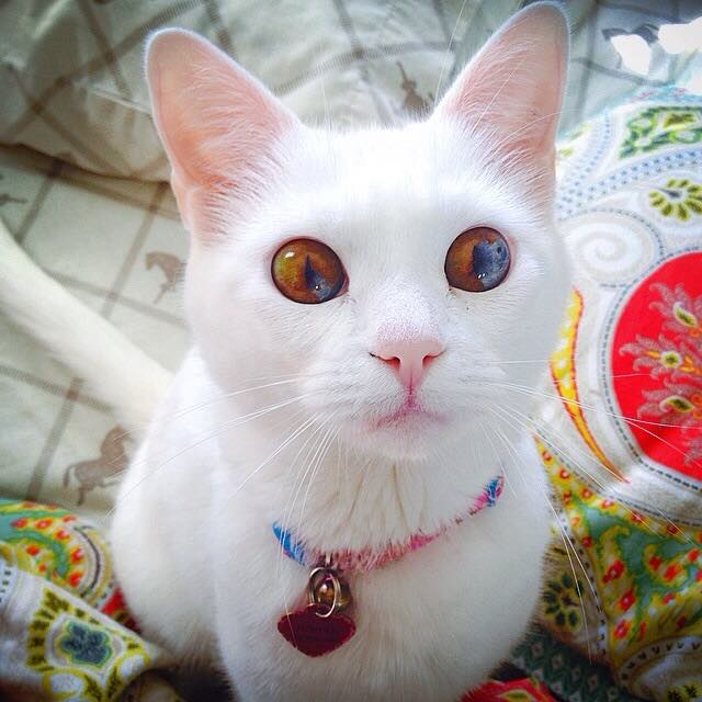 cat universe in eyes