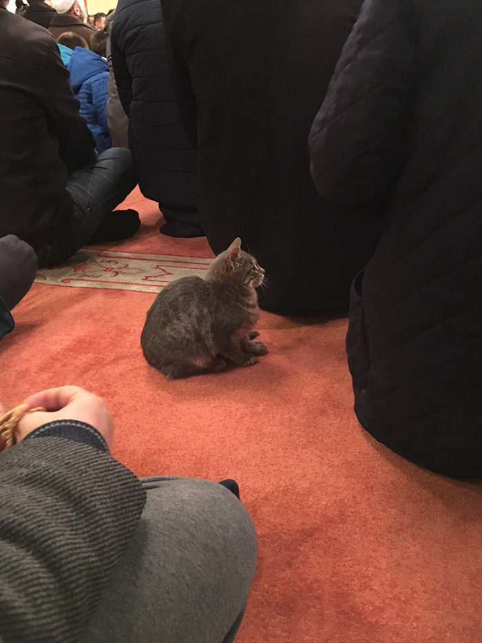 mosque lets in cats to pray