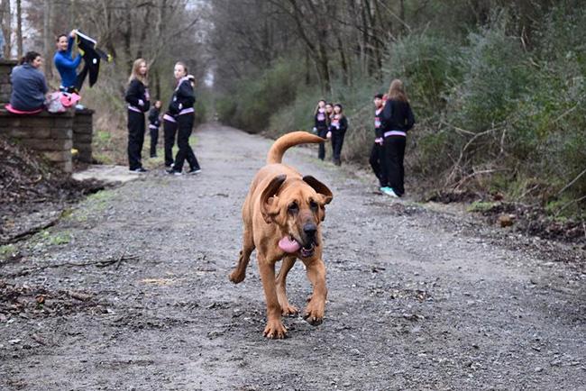 dog runs marathon