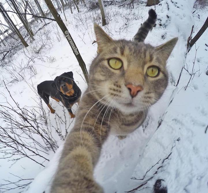 cat takes amazing selfies