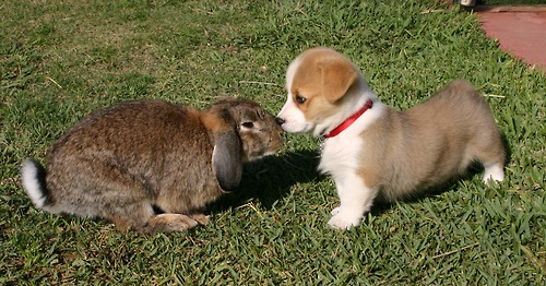 puppy and bunny touch noses