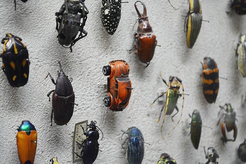 beetle exhibit car