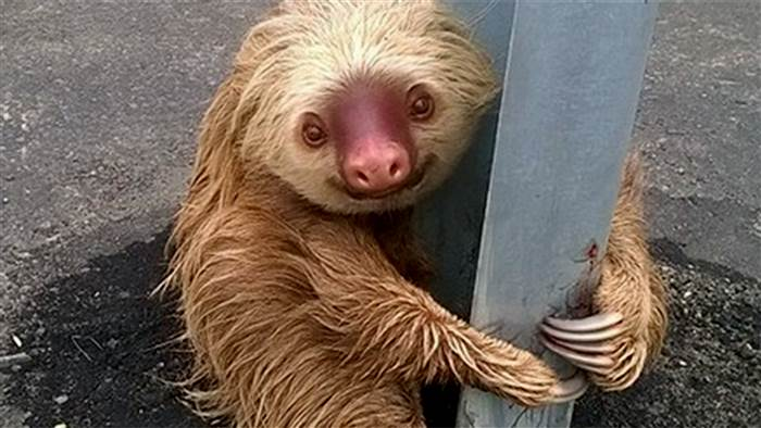 police save sloth highway