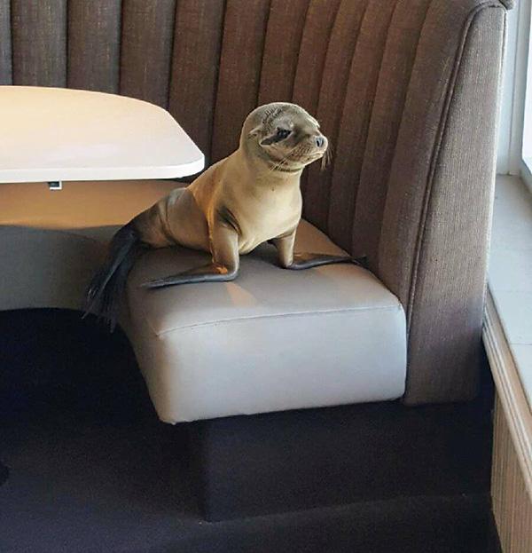 seal doors open