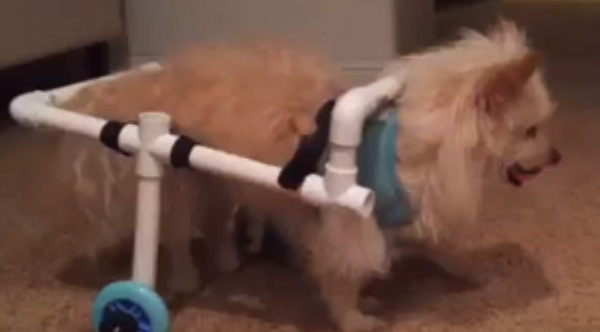 custom dog wheelchair pvc pipes