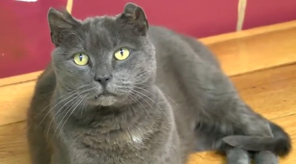 cat reunited with marine with PTSD