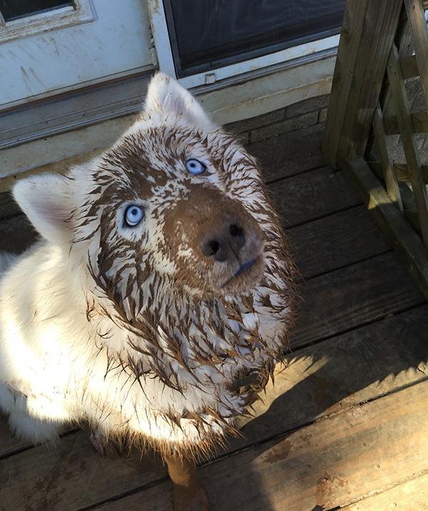 dog mud face funny