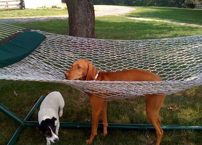 funny pictures of animals stuck