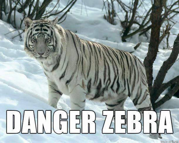 more accurate animal names funny