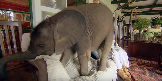 cute baby elephant videos