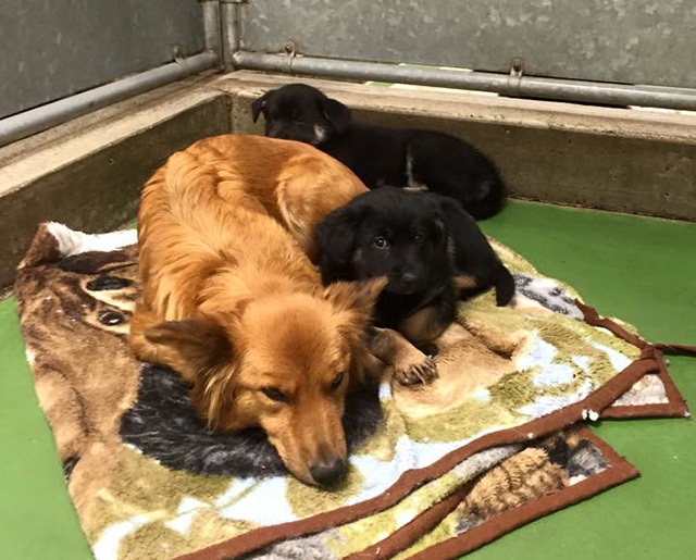 dog sneaks out of kettle to cuddle scared puppies