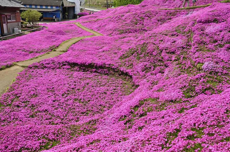 Husband plants a beautiful garden of scented flowers to make his husband plants flowers for blind wife mightylinksfo