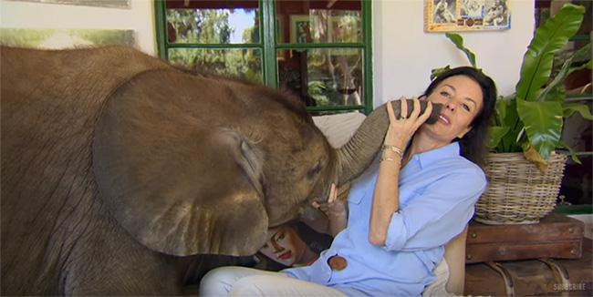 baby elephant moyo