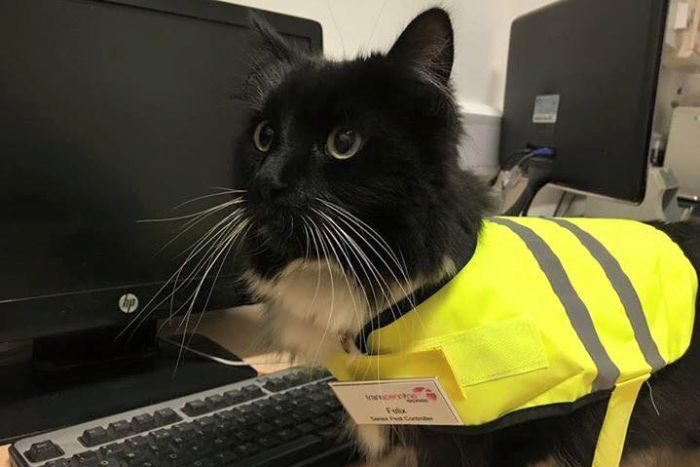 felic train station cat