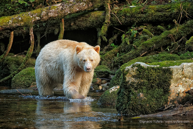 canada protect rainforest news