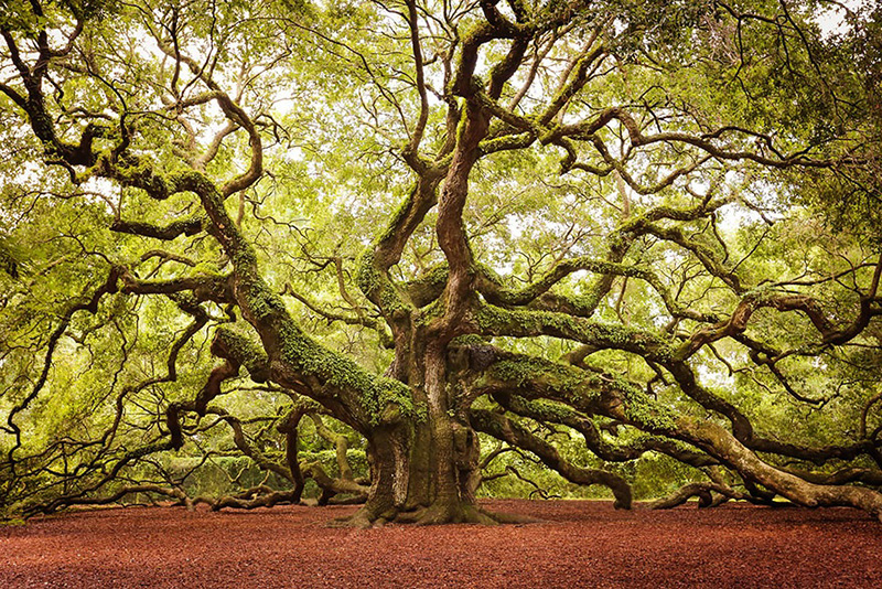 most beautiful trees in the world