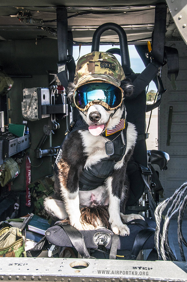 k-9 piper airport dog