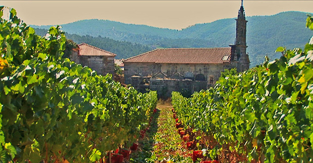 bodegas vineyard