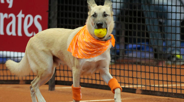 dog ball boys tennis Brazil