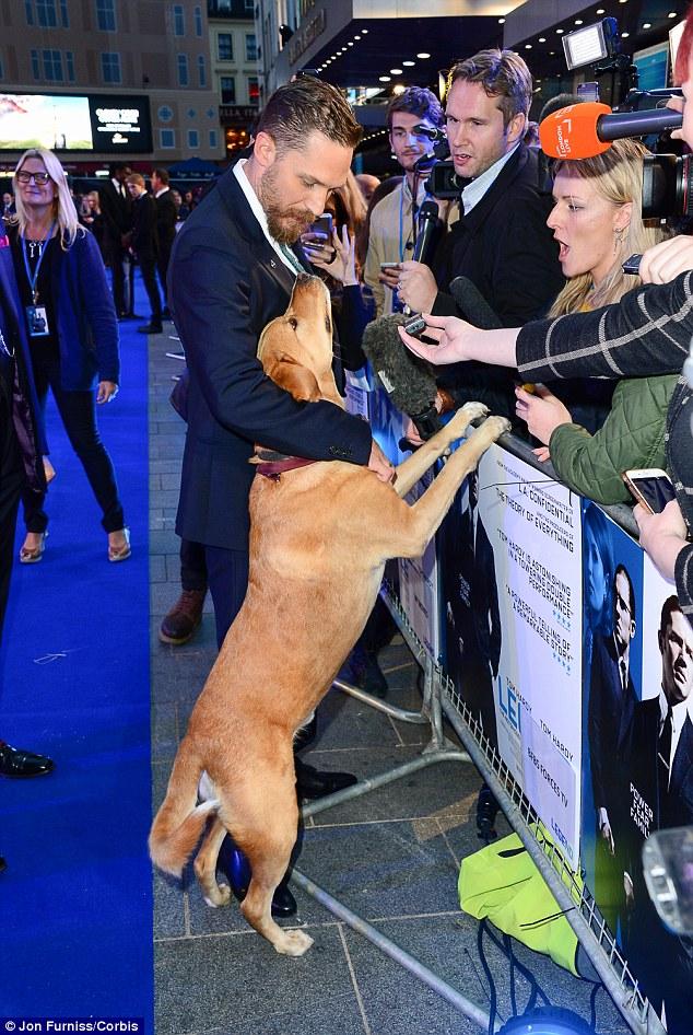 tom hardy dog premier