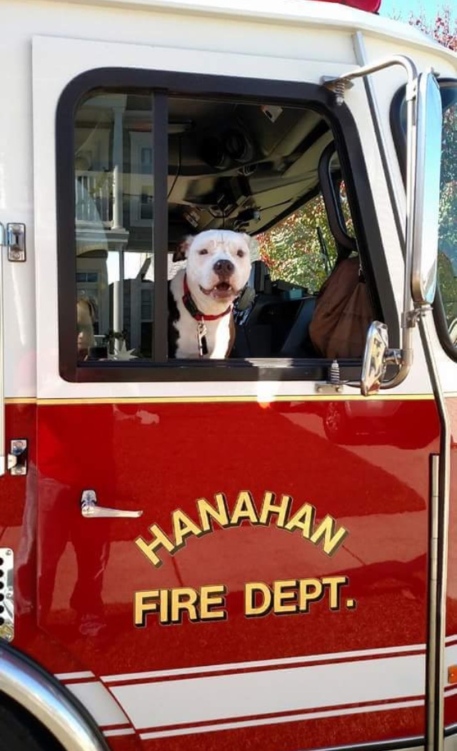 firefighter saves puppy makes him firefighter too