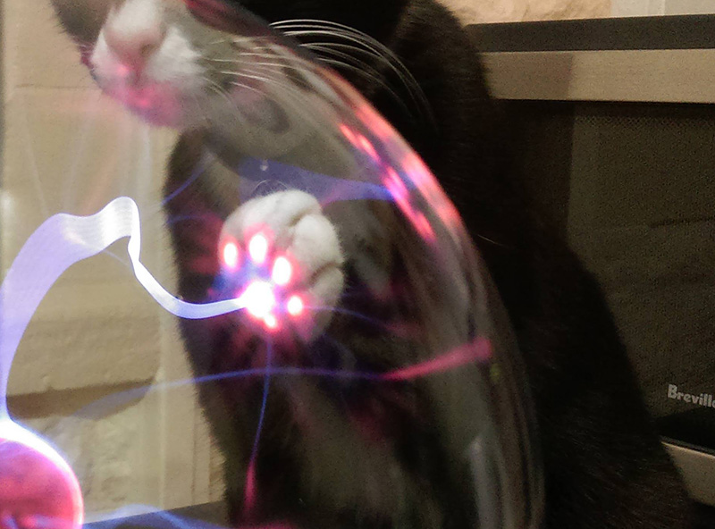 This is what Happens When A Cat Touches A Plasma Bal