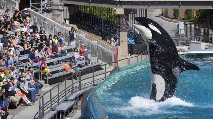 Sea World ends orca breeding
